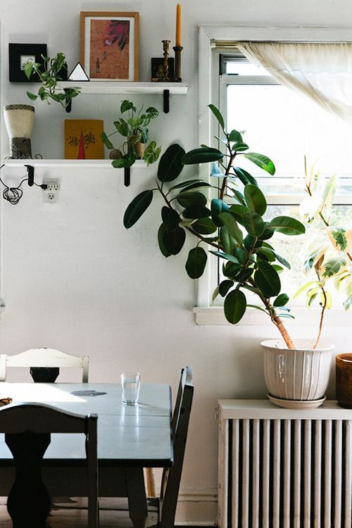 Add some life to your shelves (Find out which house plants help clean the air here)
